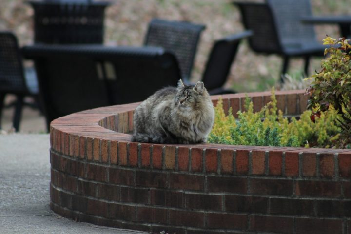 Letter to editor: Concerns for cat colony
