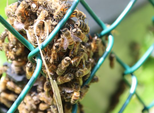 Physical Plant, S.O.S. Food Pantry stress the importance of campus bees